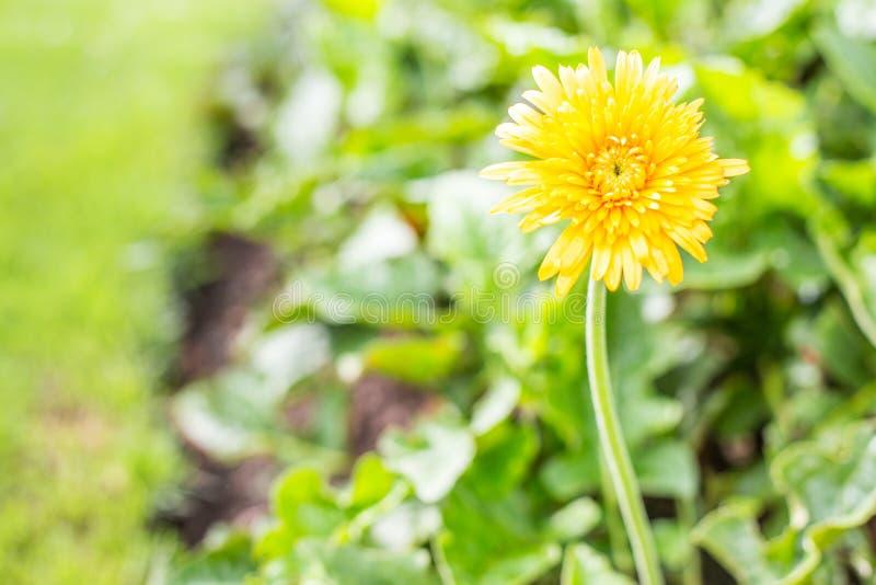 kolor żółty kwitnie stroną droga zdjęcia stock