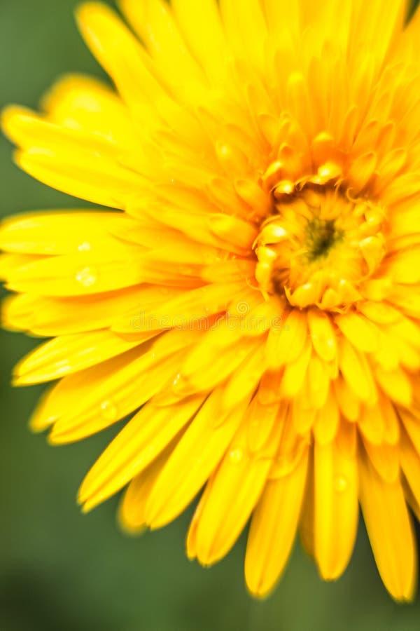 kolor żółty kwitnie stroną droga zdjęcie stock
