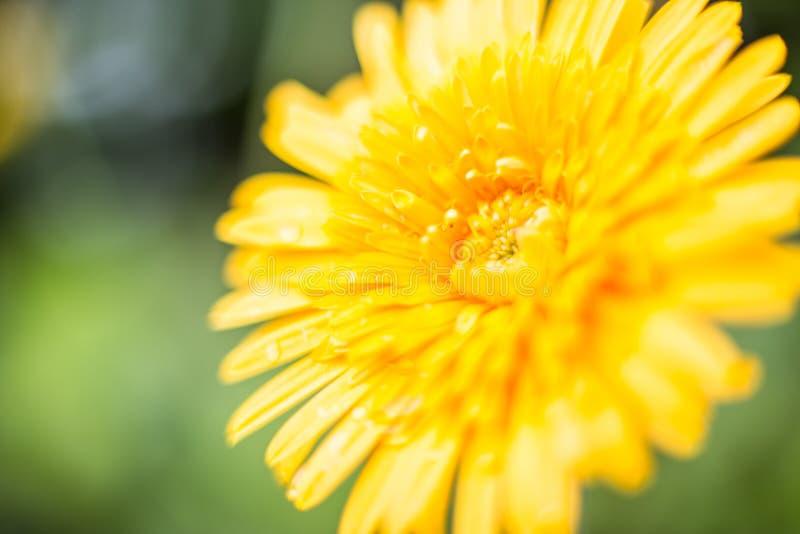 kolor żółty kwitnie stroną droga fotografia stock