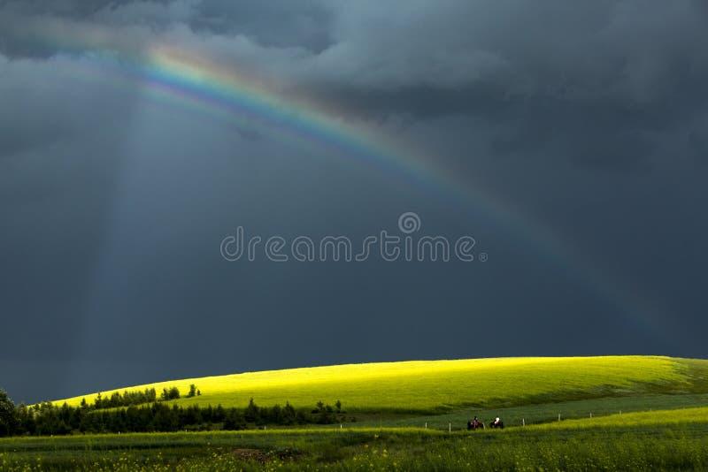 Kolor żółty kwitnie w polach w jesieni fotografia royalty free