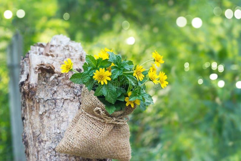 Kolor żółty kwitnie w worku na nieżywym drzewie w lasowym natury tle obrazy royalty free