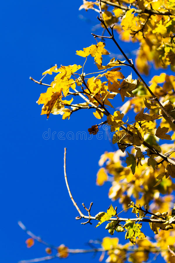 Jesieni kolor żółty zdjęcia stock