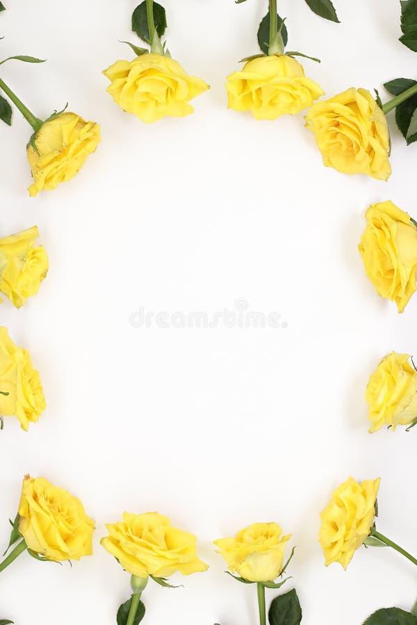 Kolor żółty róż granicy ramy Różowa obwódka na bielu zdjęcia royalty free