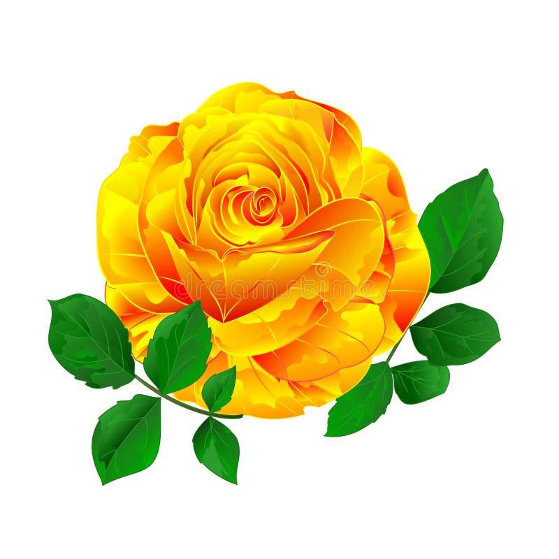 Kolor żółty róży prosty trzon z liścia rocznikiem na białego tło rocznika wektorowy ilustracyjny editable ilustracji