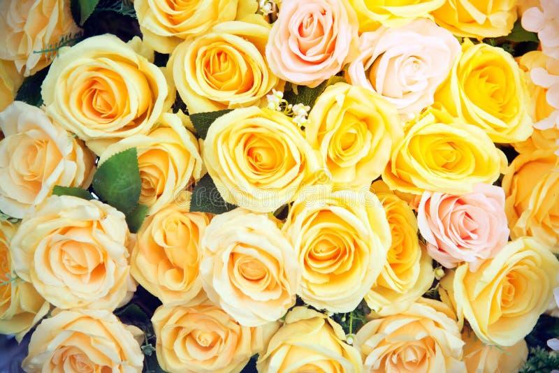 Kolor żółty róży tło i tekstura fotografia stock