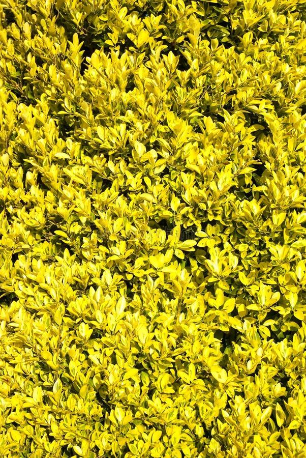 Kolor żółty rośliny jako tło obraz royalty free