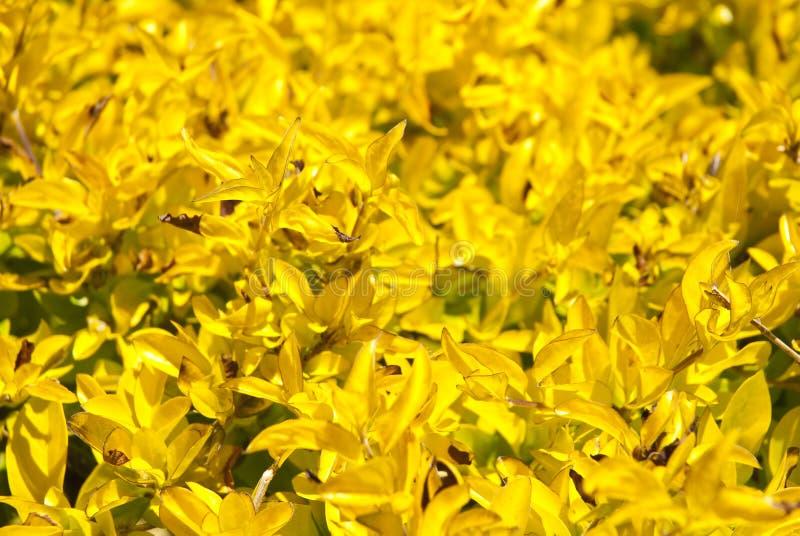 Kolor żółty rośliny jako tło zdjęcia royalty free
