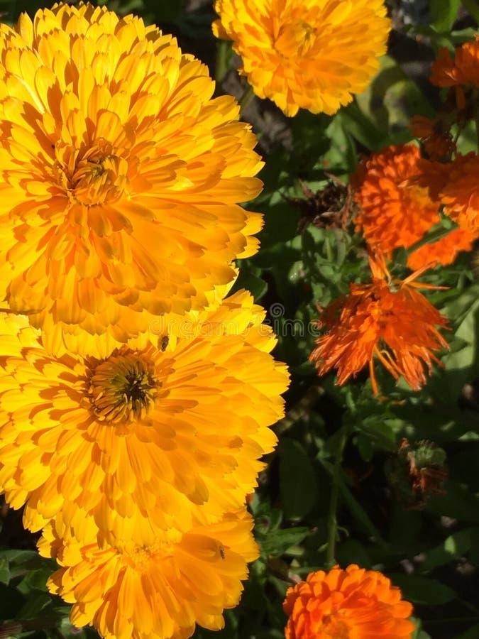 Kolor żółty strzela kwiaty zdjęcia stock