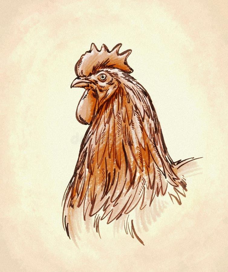 Kolor graweruje odosobnioną kurczak ilustrację royalty ilustracja