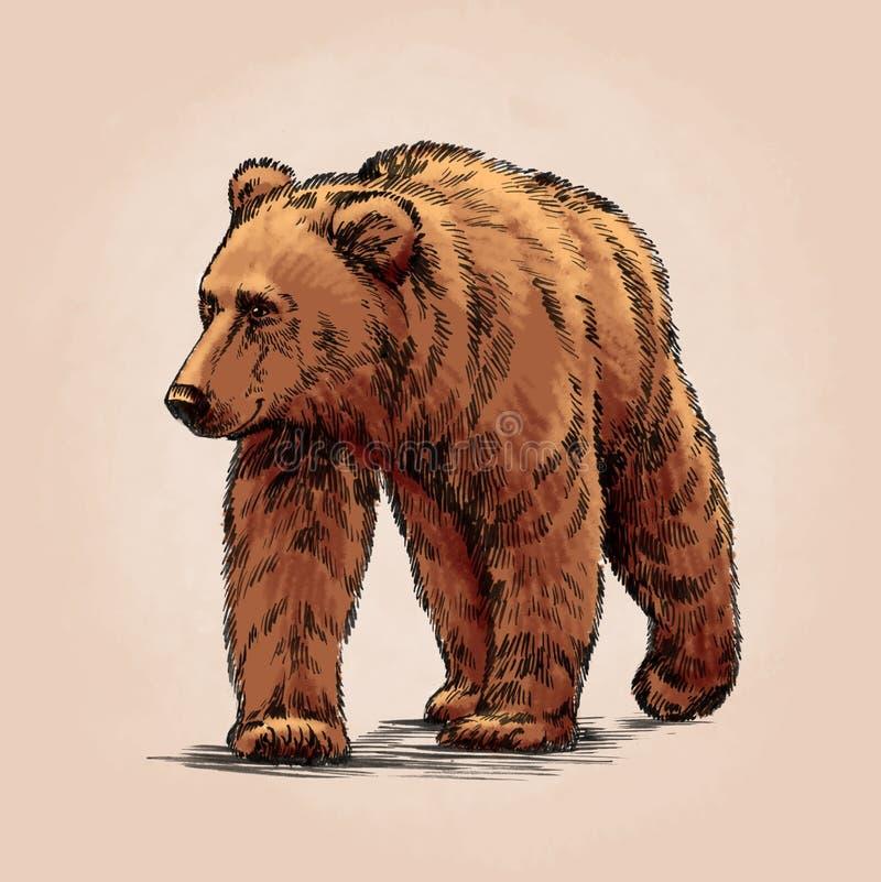 Kolor graweruje odosobnionego grizzly niedźwiedzia royalty ilustracja