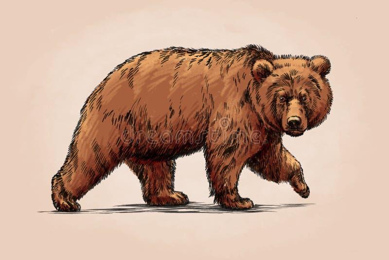 Kolor graweruje odosobnionego grizzly niedźwiedzia ilustracja wektor
