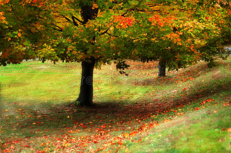 kolor jesieni fotografia royalty free