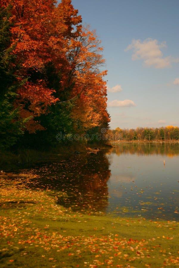 kolor jest autumn fotografia royalty free
