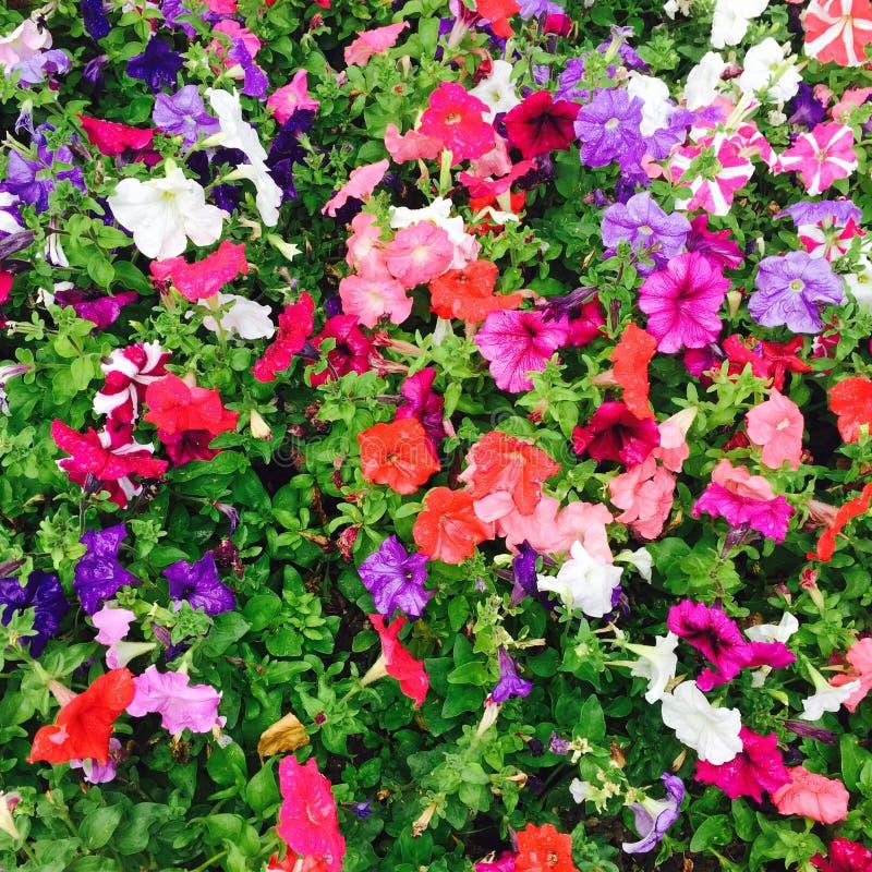 kolor kwiatów zdjęcia stock