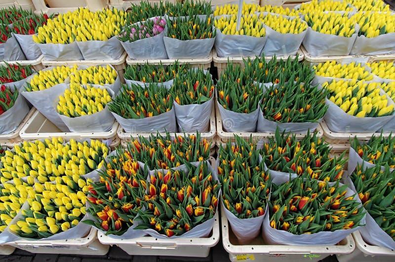 Download Kolor Kwiatów Fuschia Wielkiego Tulipanu Czerwonej Wiosny żółty Obraz Stock - Obraz złożonej z macro, greenbacks: 53777857