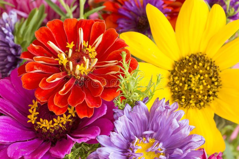 kolor kwiat?w zdjęcia royalty free