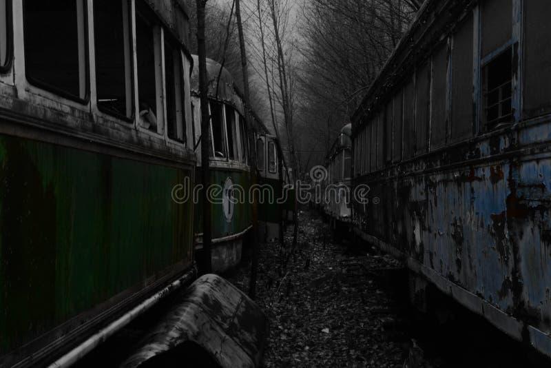 Kolor między tramwaju cmentarzem w drewnach fotografia stock