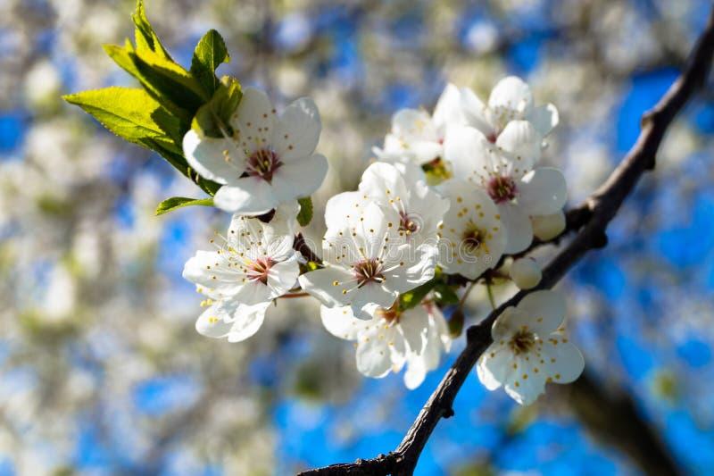 Kolor owocowy drzewo na tła niebieskim niebie zdjęcia stock