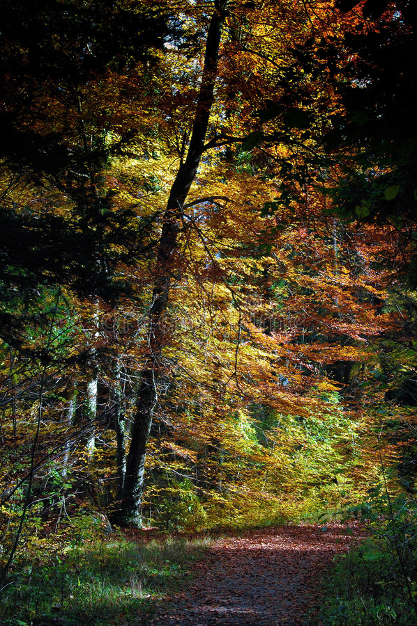 kolor oznacza drewno zdjęcie stock