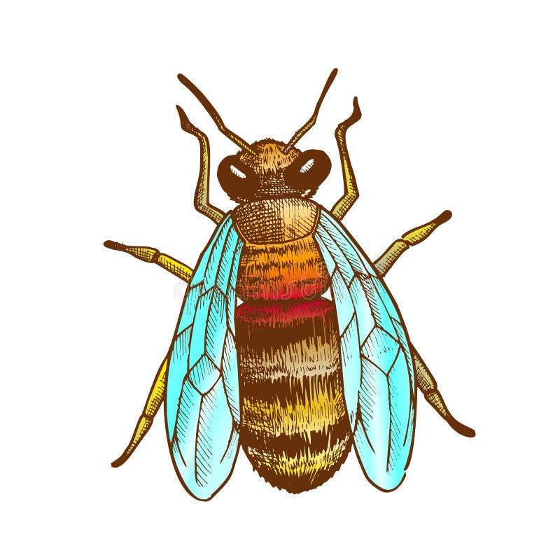 Kolor pszczoły Latającego insekta Odgórnego widoku Pasiasty Zwierzęcy wektor ilustracji