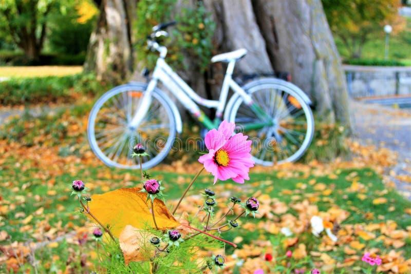 Kolor żółty, bicykl, roślina, kwiat
