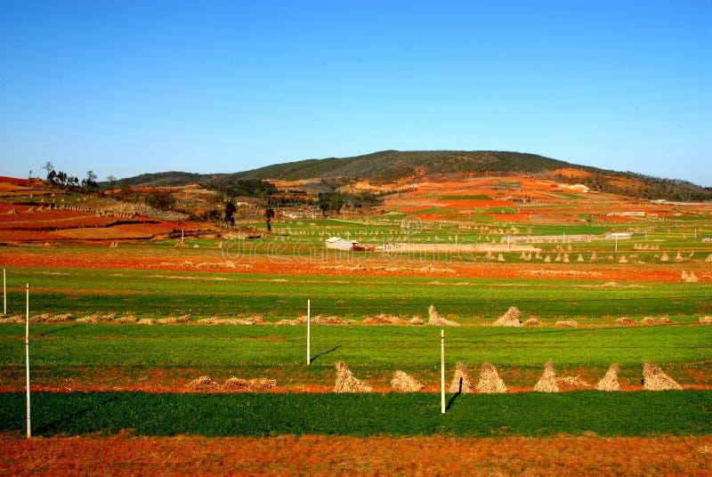 Kolor ziemia w Yunnan zdjęcie stock
