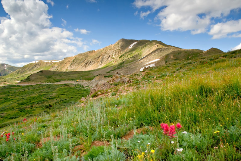 Kolorado-alpine Wiese stockfoto
