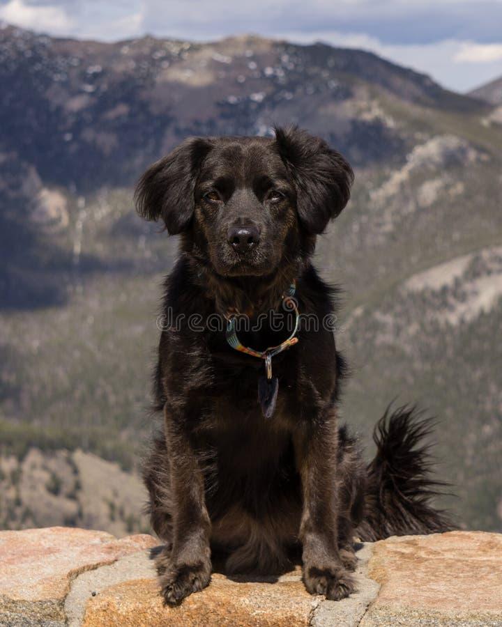 Kolorado góry pies zdjęcie royalty free