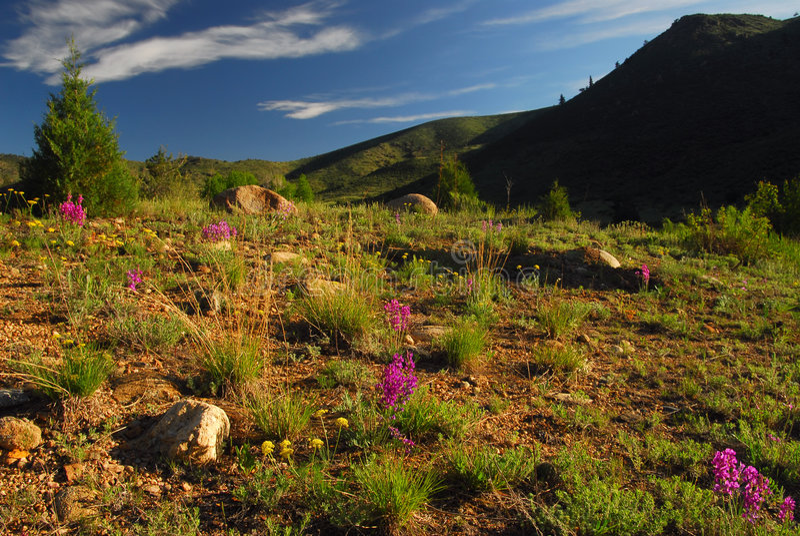 Kolorado-Landschaft lizenzfreies stockfoto