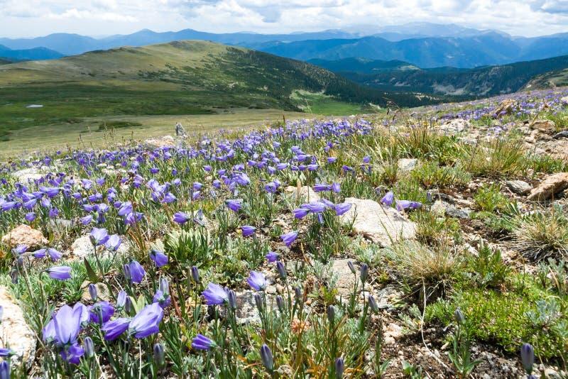 Kolorado Skalistej góry krajobraz z wiosen Wildflowers obrazy stock