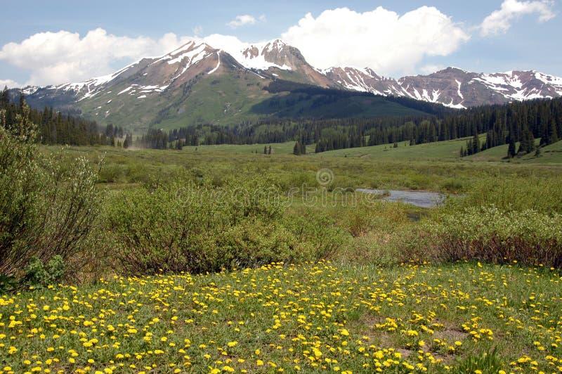Kolorado-Wiese u. Berg stockfotos