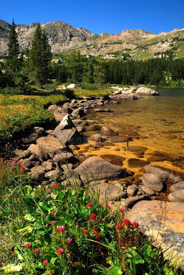 Kolorado-Wildnis stockbilder