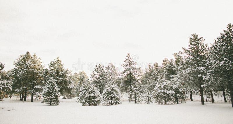 Kolorado zimy kraina cudów obrazy stock