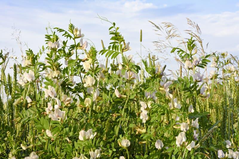 Kolorowa łąka z kwiatami zamyka up przeciw niebu zdjęcie stock