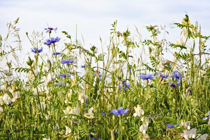 Kolorowa łąka z kwiatami zamyka up przeciw niebu fotografia stock