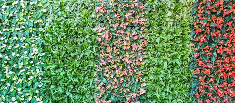 Kolorowa ściana spadix kwitnie, selekcyjna ostrość obrazy royalty free