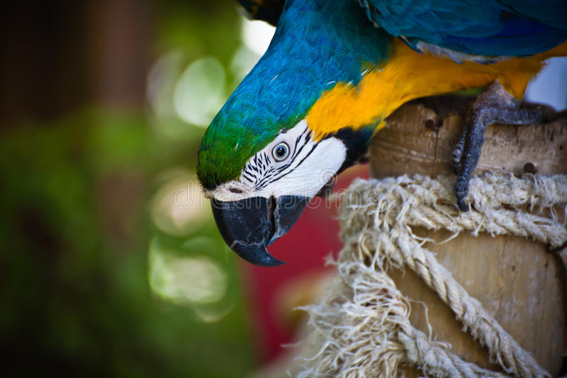 Download Kolorowa ara obraz stock. Obraz złożonej z gałąź, kolory - 57665119