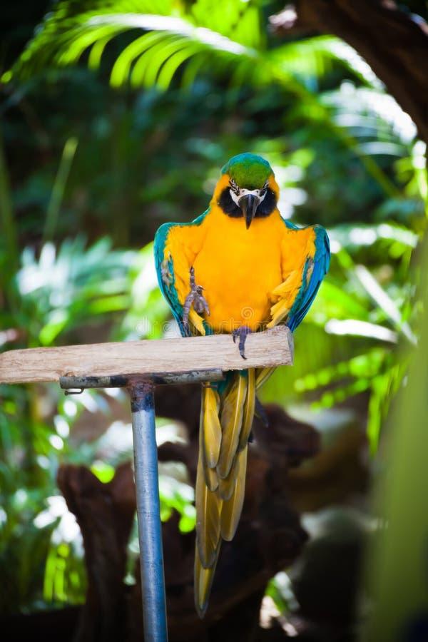 Download Kolorowa ara obraz stock. Obraz złożonej z greenbacks - 57665341