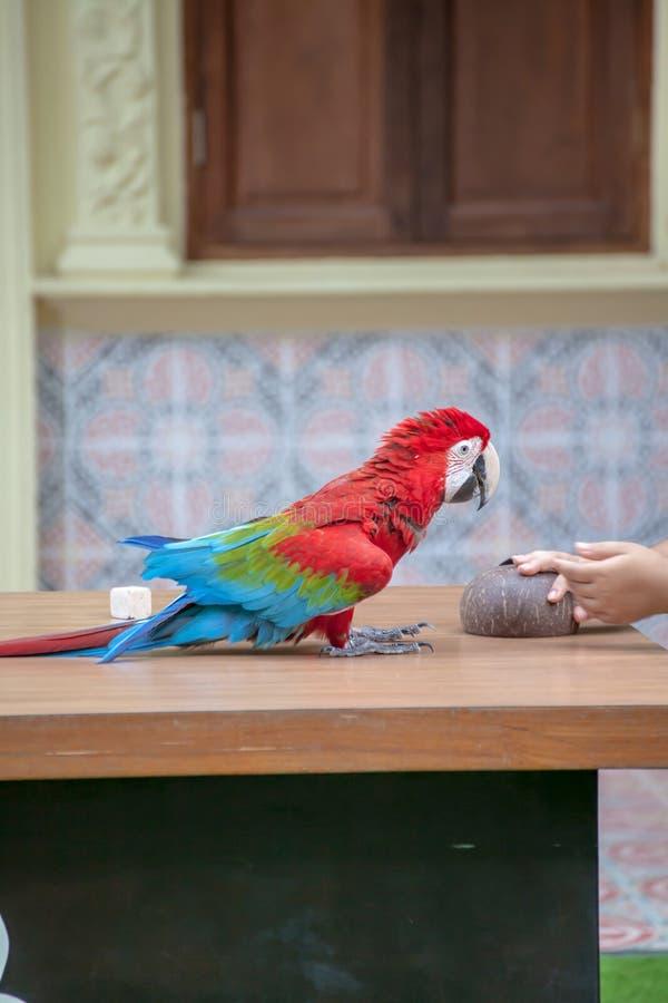 Download Kolorowa ara obraz stock. Obraz złożonej z ptak, horyzontalny - 57665489