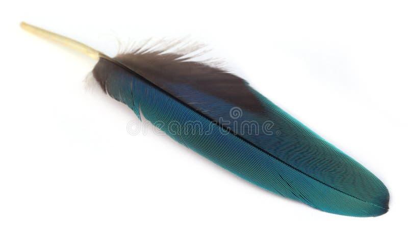 Kolorowa dutka Macau ptak obrazy stock