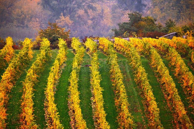 Kolorowa jesień w winogradów jardach, Austria fotografia royalty free
