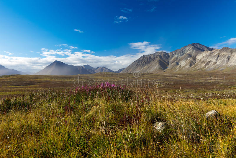 Kolorowa jesieni Chukotka tundra, Arktyczny okrąg zdjęcia royalty free