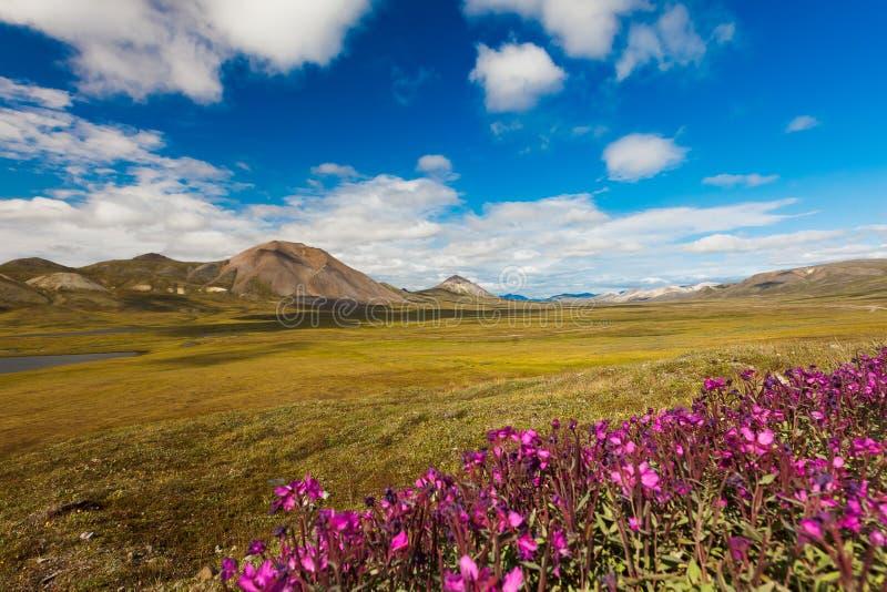 Kolorowa jesieni Chukotka tundra, Chukotka Rosja zdjęcie royalty free