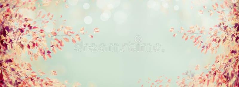 Kolorowa jesieni gałąź z czerwienią opuszcza na bławym bokeh tle, sztandar