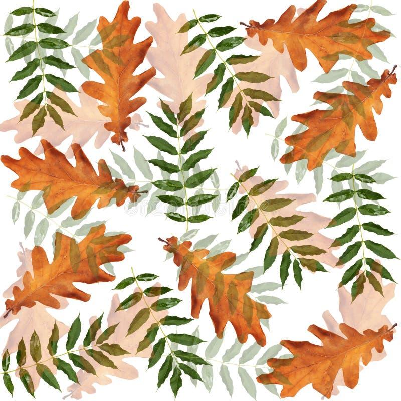 Kolorowa jesienna gałąź drzewo na odosobnionym tle ilustracji