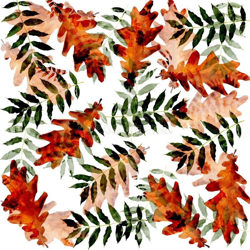 Kolorowa jesienna gałąź drzewo na odosobnionym tle ilustracja wektor