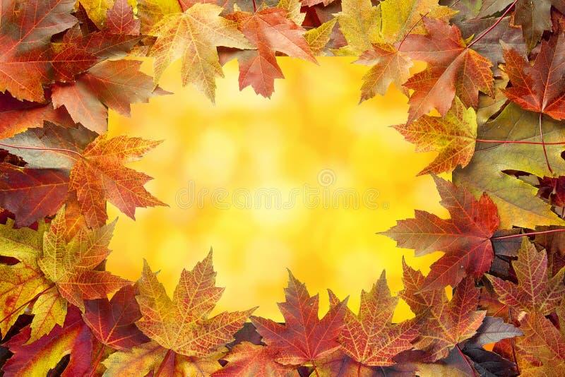 Kolorowa Klonowego drzewa spadku liści granica z Bokeh zdjęcie royalty free