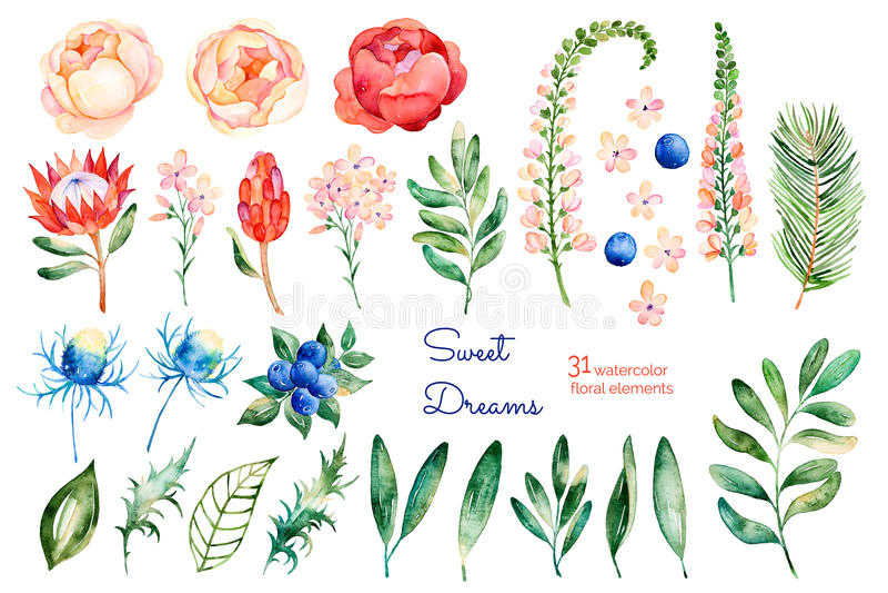 Kolorowa kwiecista kolekcja z różami, kwiaty, liście, protea, błękitne jagody, świerczyny gałąź, eryngium obrazy royalty free