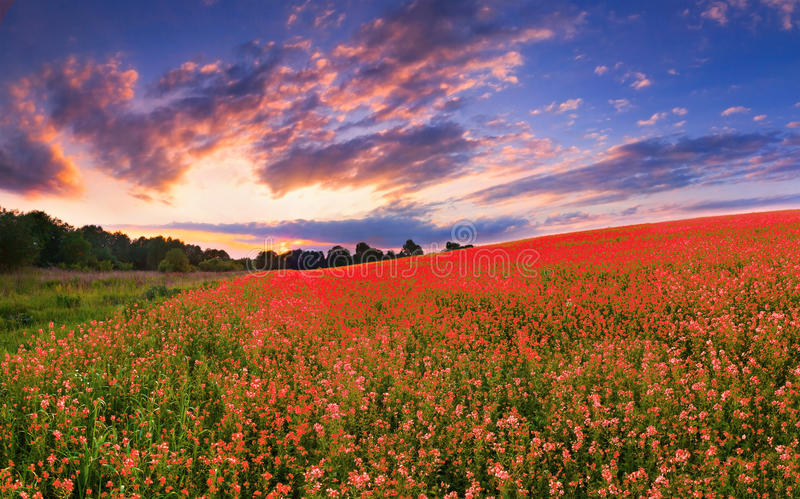 kolorowa panorama zdjęcie royalty free