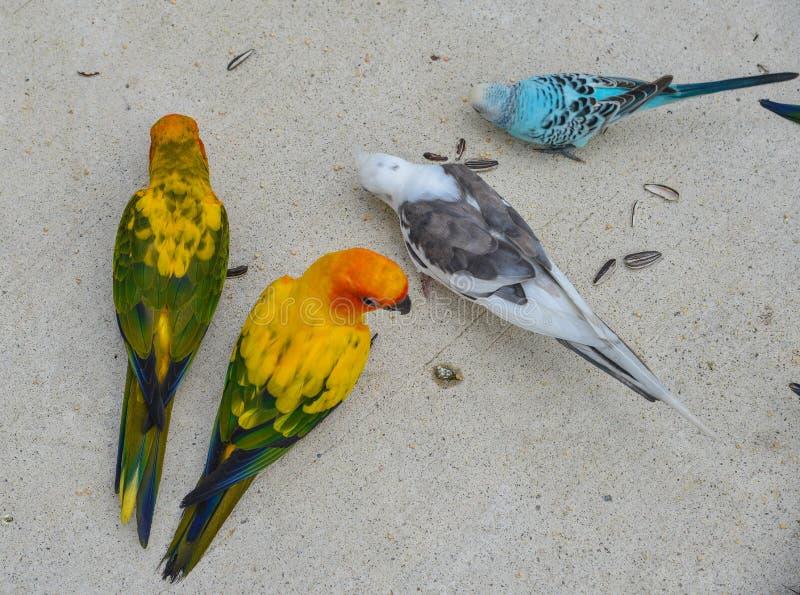 Kolorowa papuga w parku fotografia royalty free